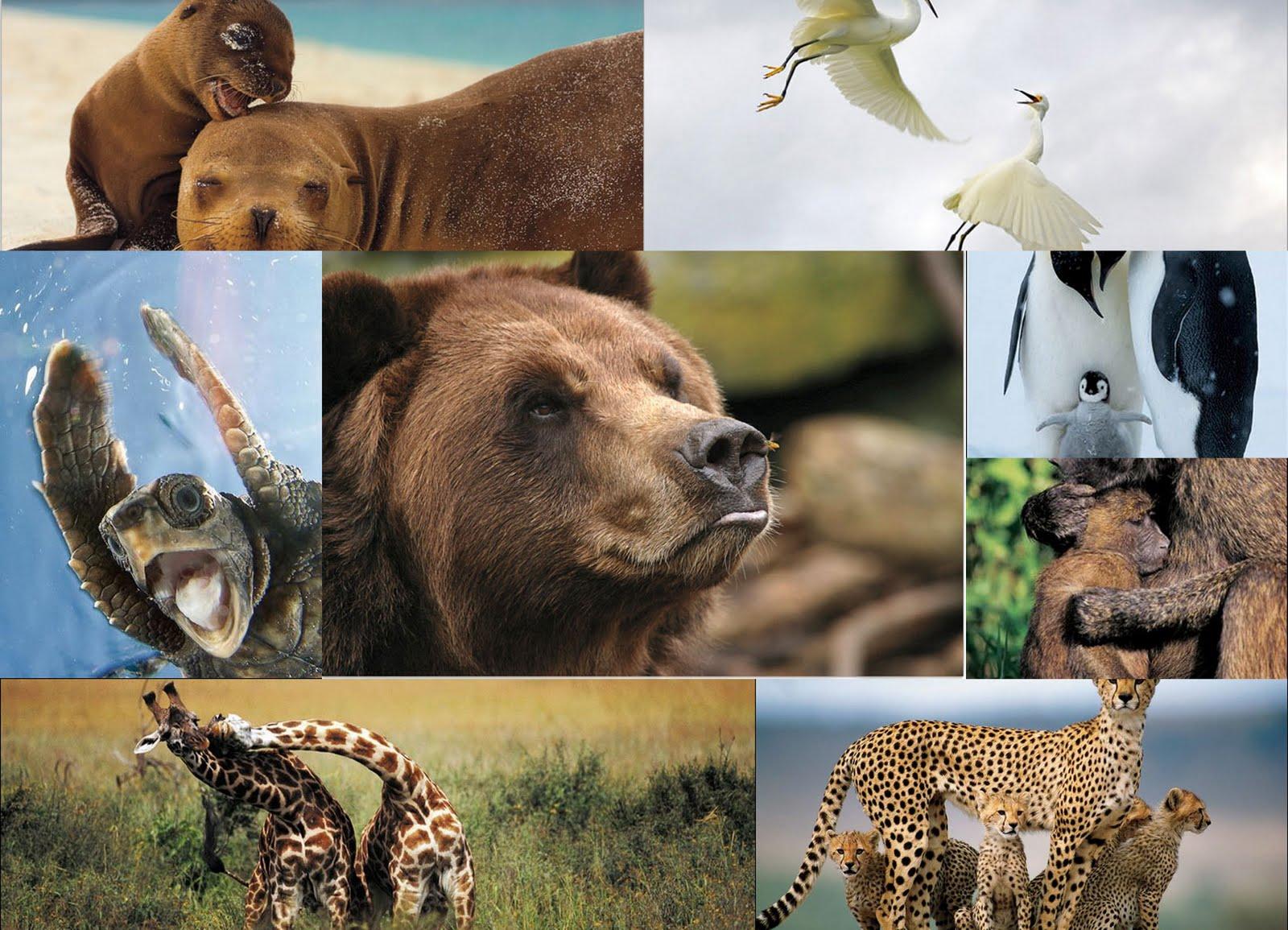 biodiversity_zoologia_inspiracion_montessori_method_inspiration_education