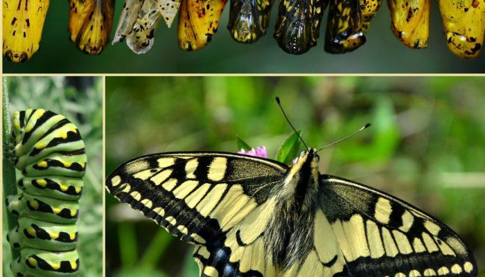 asesoramiento_para_padres_inspiracion_montessori_proceso_niño_mariposa_trasnsformacion_vida_interior_