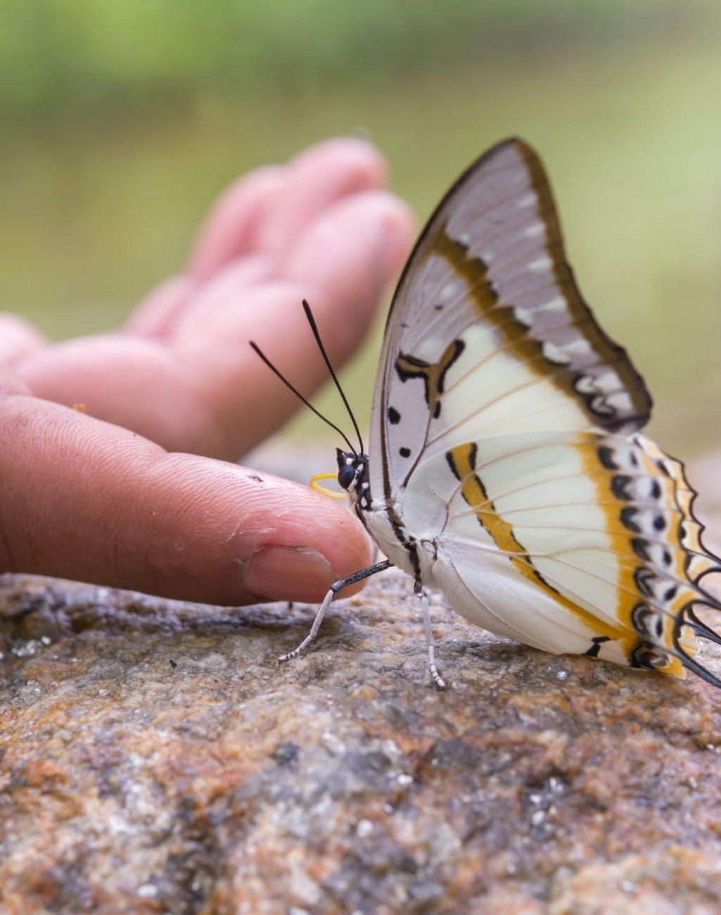 butterfly on a rock